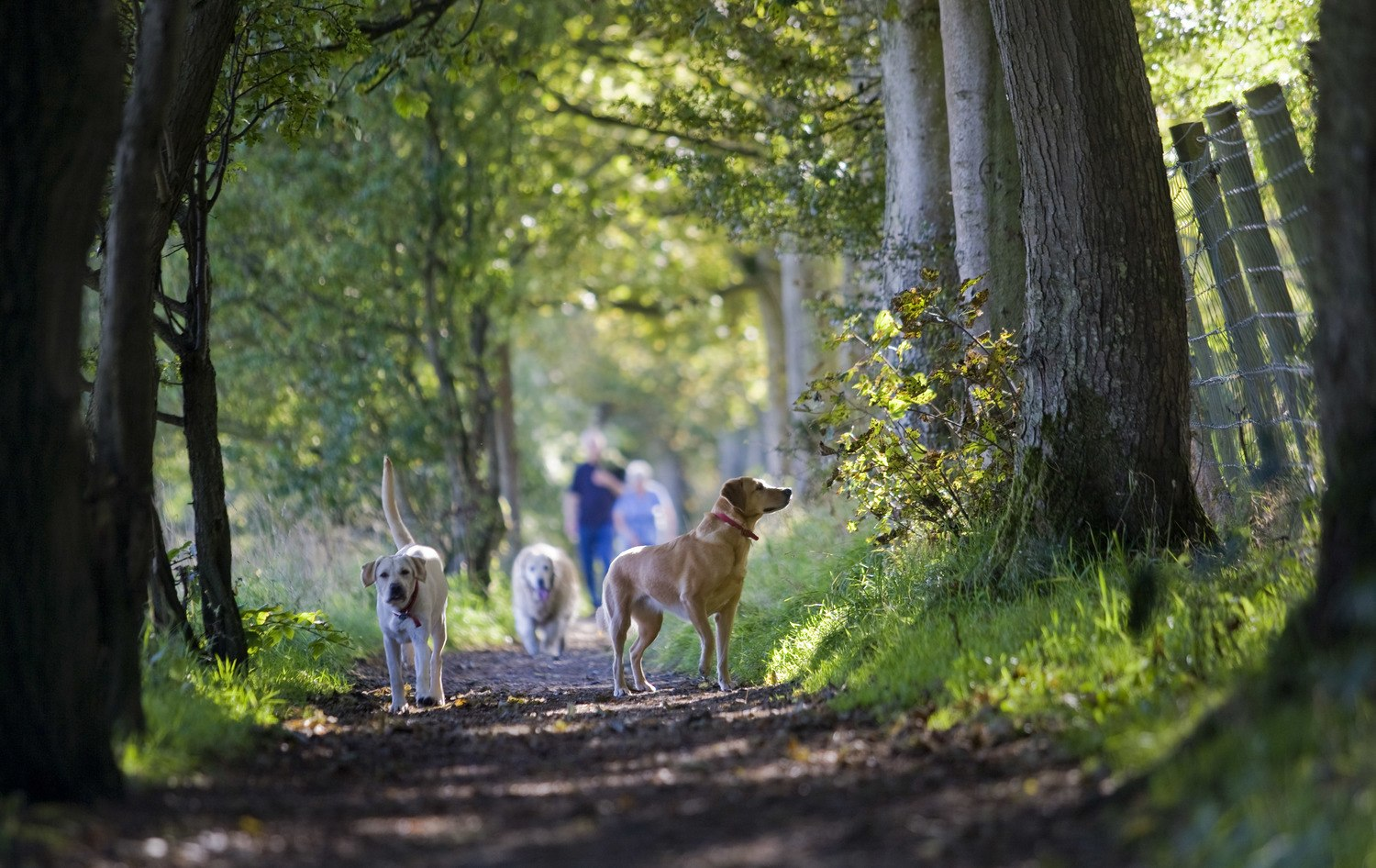 Walk a dog at blessingbourne estate pet friendly accommodation country getaway family holiday northern ireland