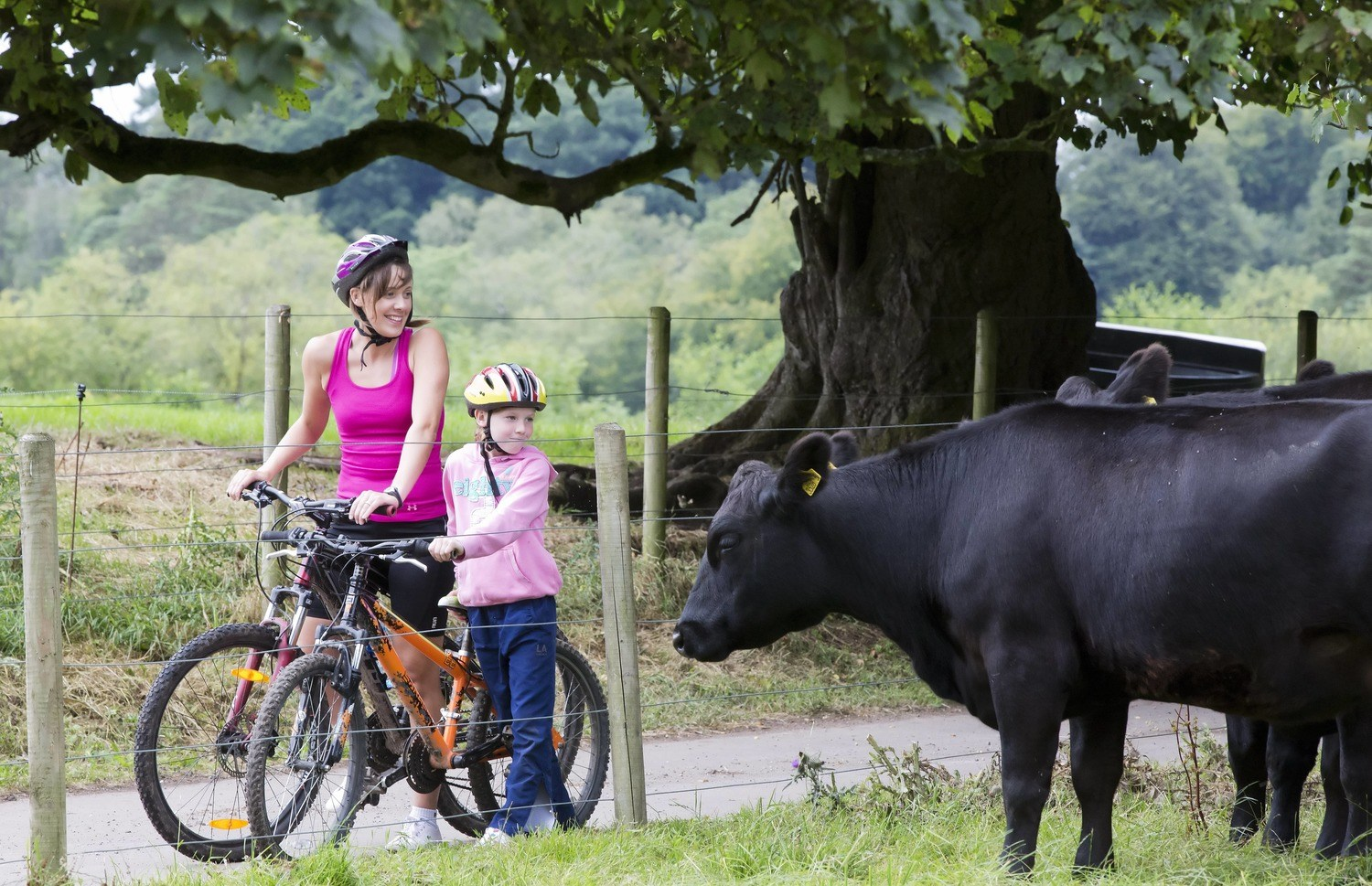 Learn to ride a bike at Blessingbourne Estate Kids Adults beginners experts Mountian bike trails cow mother and child outdoor activity