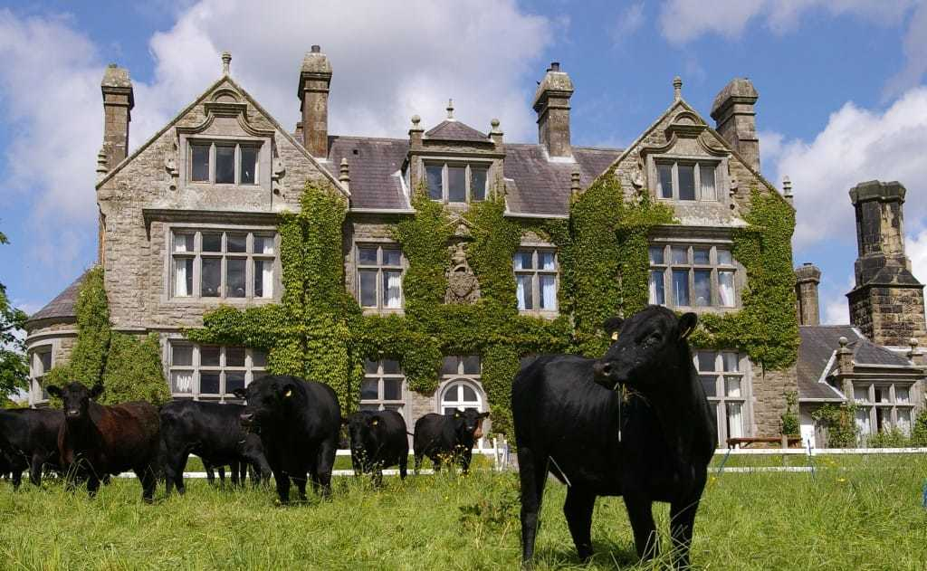 cows and cattle onsite at Blessingbourne country estate