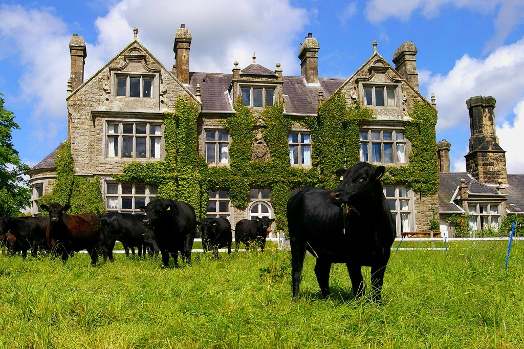 Working Farm at Blessingbourne country house Estate Fivemiletown Northern Ireland Five Mile Town authentic ireland things to do in fermanagh points of interest group accommodation family friendly accommodation pet friendly dog friendly animals cows