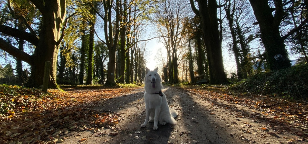 Blessingbourne Country Estate - Pet Friendly