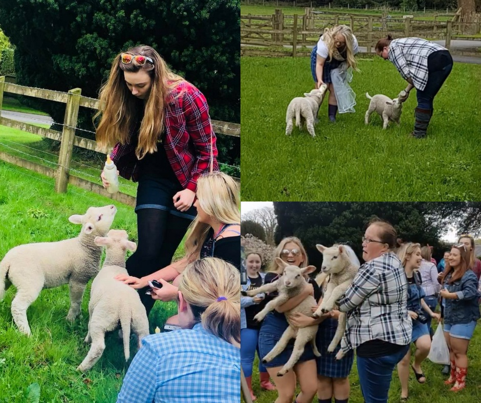 Farm Activities lambs hen party